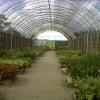 Bangka botanical garden 1