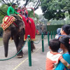 kebun binatang surabaya 3