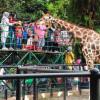kebun binatang surabaya 2